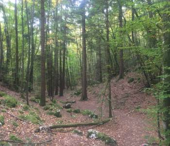 foret-annecy.jpg